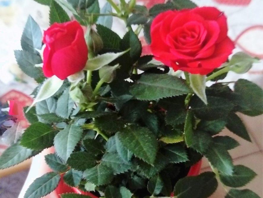 Aký darček pre priateľku - ženu - maminku – svokru - starú mamu na narodeniny, meniny, Vianoce bude najvhodnejší?